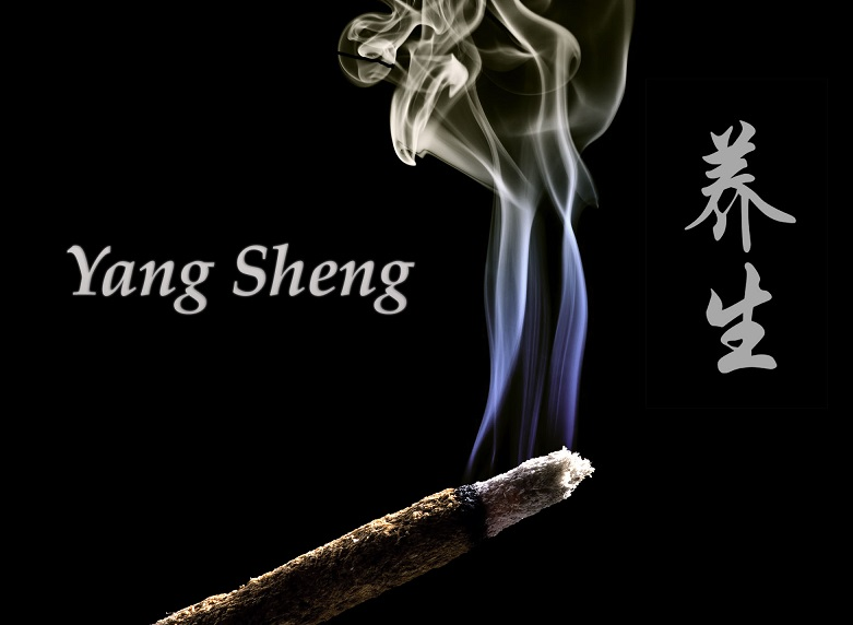 YANG SHENG: le début d'une longue histoire!